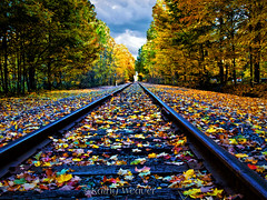 Fall on the Tracks (kweaver2) Tags: autumn trees fall nature leaves landscape photography pennsylvania kentucky tracks explore erie frontpage railroadtracks kweaver2 olympuse520 kathyweaver fallonthetracks