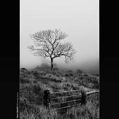 You asked for it, so you got it. ([ Kane ]) Tags: sky blackandwhite bw tree grass fog landscape dawn gate farm hill qld kane gledhill canon2470f28l 50d canoneos50d kanegledhill wwwhumanhabitscomau kanegledhillphotography