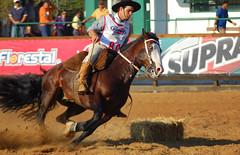 LS Nazareno (Eduardo Amorim) Tags: brazil horses horse southamerica brasil criollo caballo cheval caballos cavalos pferde cavalli cavallo cavalo gauchos pferd riograndedosul hest hevonen brsil chevaux gaucho  amricadosul hst gacho  amriquedusud  gachos  sudamrica suramrica amricadelsur  sdamerika esteio crioulo caballoscriollos criollos   americadelsud freiodeouro  crioulos cavalocrioulo americameridionale holidaysvacanzeurlaub caballocriollo eduardoamorim cavaloscrioulos iayayam yamaiay