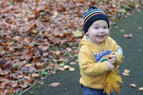 Playing with Leaves 4