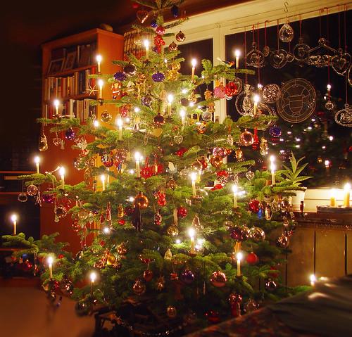 christmas tree weihnachtsbaum christbaum tannenbaum - European Christmas Tree