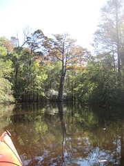 Wamba Creek Kayak Trip Photo