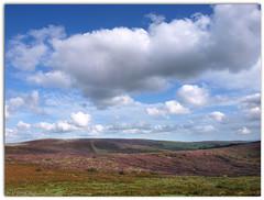 Big sky (ExeDave) Tags: uk autumn england sky southwest clouds geotagged nationalpark heather sac devon rush gb dartmoor rushes ling 2009 esa moorland upland augsut callunavulgaris sssi abigfave rushpasture heathermoorland warrenhouse hameldown headlandwarren challacombedown geo:lat=50612956 p8295078 eastdartmoor geo:lon=3874869