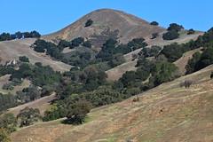 American nature (Håkan Dahlström) Tags: california sky usa tree verde green nature grass forest landscape groen unitedstates united hill vert states grün sanfelipe grön grn