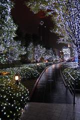 A Shinjuku Christmas (jpellgen) Tags: christmas xmas november trees holiday clock station japan night season japanese lights tokyo nikon shinjuku asia illumination  nippon  1855mm nikkor 2009  nihon kanto honshu docomotower d40 terracecity