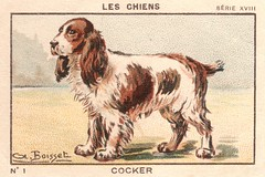 milliat chiens002