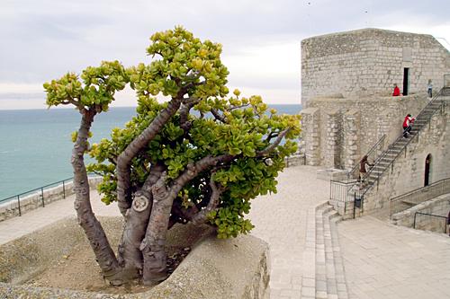 peniscola-tree