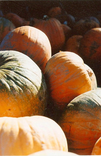 Sauvie Island: Pumpkin Patch