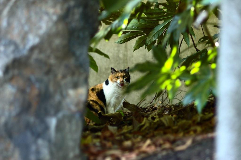 冬の猫達 #5
