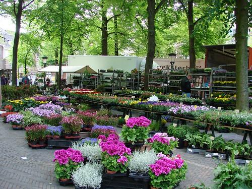 Utrecht Bloemenmarkt