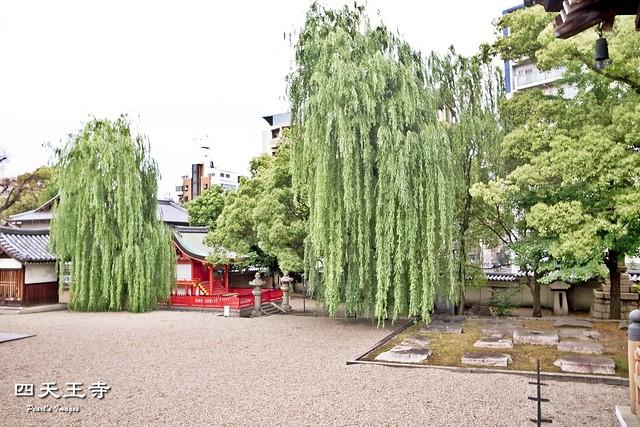 高大的柳樹與小神社