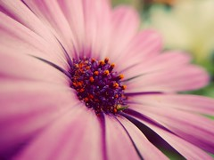 Quick mobile snap. Moto X-Play (Jasrmcf) Tags: motorola xplay motoxplay mobile flowers flower bokeh bokehlicious bokehgraph dof detail depthoffield smooth macro macrotube pink garden nature ngc