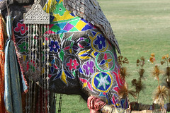 Elephant Festival Jaipur 2 (Pondspider) Tags: decorated elephantfestival anneroberts annecattrell pondspider