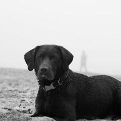 DuEOs AnnImOs (fertraban) Tags: dog fog labrador gijn lola playa perro niebla xixn sern labradorchocolate