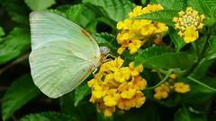 A monsoon flutter