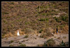Fotógrafo en acción - Novios Cabo de Gata (scarabaeus sacer) Tags: 9 verano 2009 almería cabodegata cabodegatanijar nikond300 jatm64