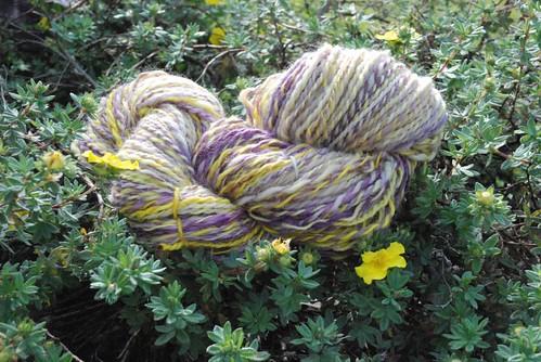 """eXtreme Spinning's """"Iris"""" shetland"""