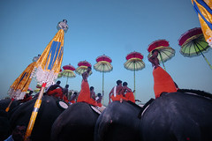elephants. men. umbrellas. (vbsuresh) Tags: blue sky people music orange india men colors festival feast standing evening colours different crowd wide kerala double sound gathering designs elephants umbrellas beats pooram thrissurpooram 40d