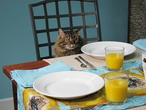 feline breakfast