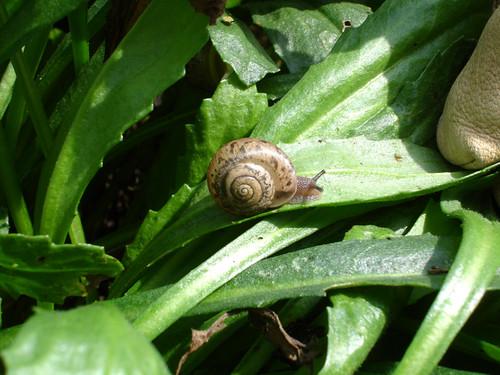 Snailio