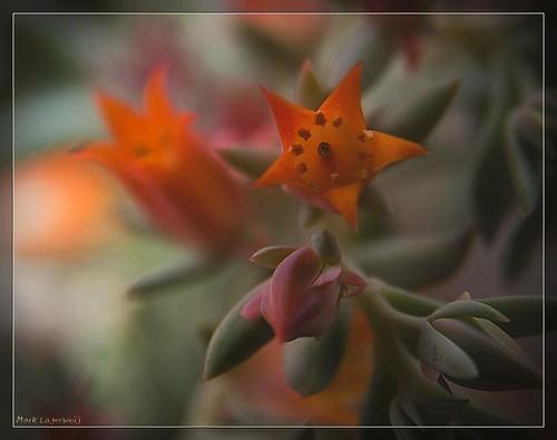 Orange Flower, Devonian Botanical Gardens