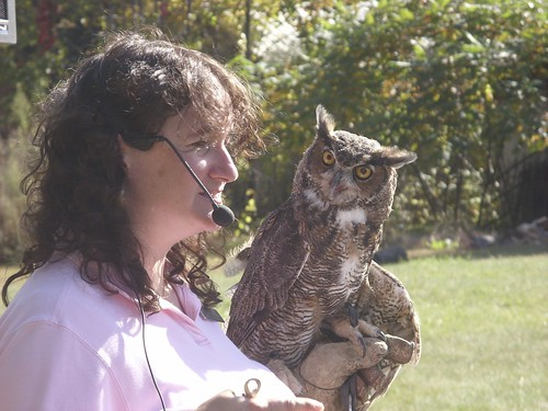 nature educator & owl