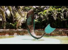 Peixe de Bronze (Arimm) Tags: sculpture fish tree water freeassociation fotosencadenadas statue brasil bronze geotagged sony palm a200 fz18 arimm dslra200  geo:lat=3843845 geo:lon=38390762