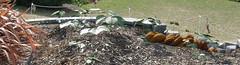 2008-01-27-Stoneleigh-2007-06-10-Kudzu! (russellstreet) Tags: newzealand sculpture auckland kudzu nzl manukau aucklandbotanicalgardens jimwheeler sculpturesinthegarden2007 stoneleighsculpturesinthegarden2007