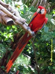 IMG_1311-WDW-DAK-scarlet-macaw-sitting-pretty