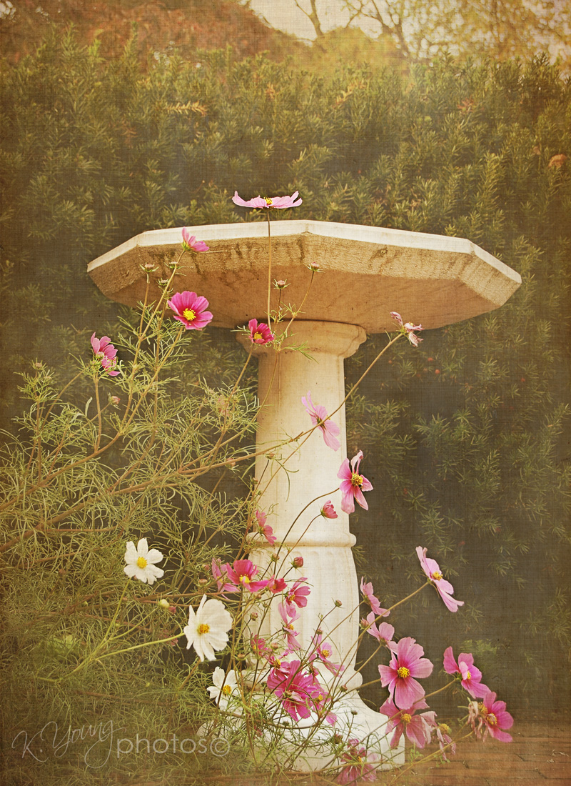Evening at the birdbath