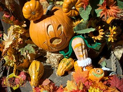 Disney Pumpkin Carvings.