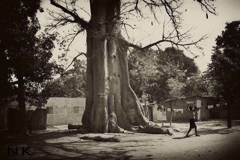 caxito-baobab
