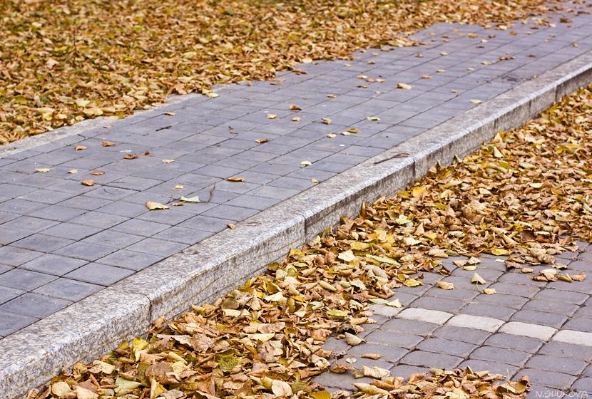 Autumn_21