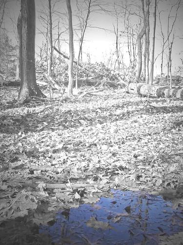autumnal pool