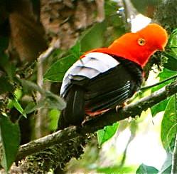 ecuador-birds