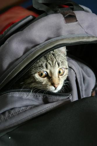 Katze im Rucksack cat in backpack