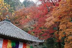 (Eiji Murakami) Tags: autumn japan sigma    nara foveon   dp2