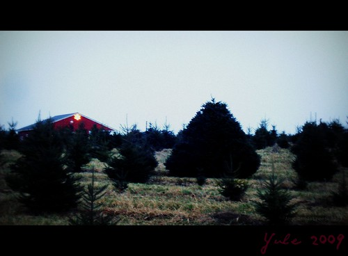 at the tree farm