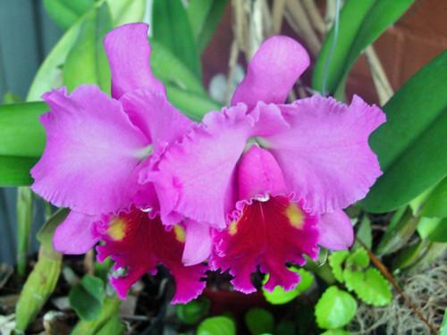 orquideas flores