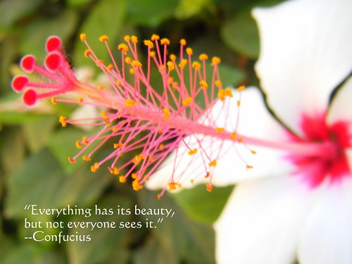 Everything Has Its Beauty