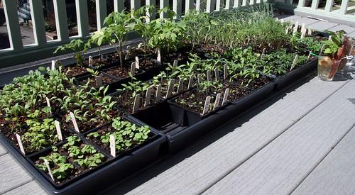 seedlings 044