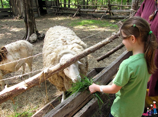 Feeding sheep at the Ozark Medieval Fortress