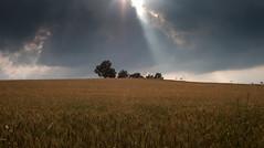 illuminato (_raffaella_) Tags: nuvole sole grano boraalta