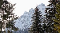 Piz Sagron through the snow-covered forest (ab.130722jvkz) Tags: italy trentino alps easternalps dolomites vettefeltrine mountains winter snowfall