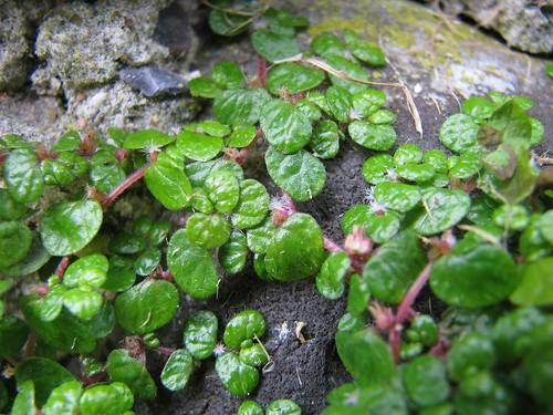 ayuda con los nombres | Cuidar de tus plantas es facilisimo.com