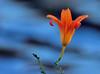 On the Banks of Lake Elkhorn (ozoni11) Tags: flowers plants lake plant flower nature interestingness nikon bokeh lakes explore columbiamaryland d300 339 lakeelkhorn i500 interestingness339 michaeloberman explore339 ozoni11