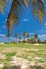 no title needed (Fabi Fliervoet) Tags: pictures trees nature island saintmartin photos stock stmartin palm tropical caribbean stmaarten sintmaarten netherlandsantilles saintmaarten fabifliervoet