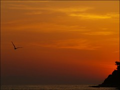 Jonathan seagull (maios) Tags: travel sunset sea water greek photo europa flickr photographer jonathan seagull hellas bach greece macedonia fotografia livingston manikis maios iosif  heliography               iosifmanikis