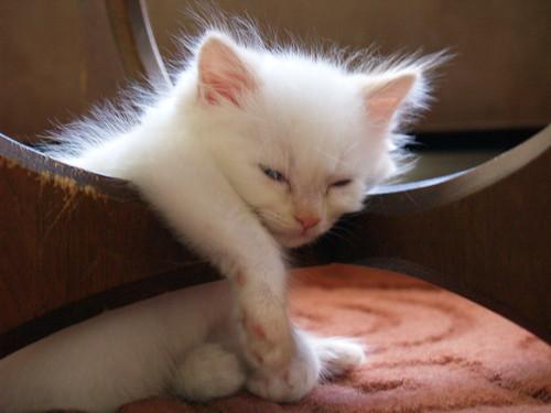 sleeping sitting up