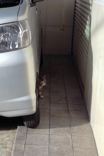 Today's Cat@20090715